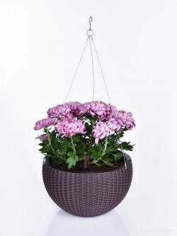 DEDRA Závěsný květináč, čokoládový,XL
