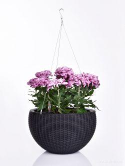 RATAN AQUARIUS závěsný květináč samozavlažovací, černý, XL