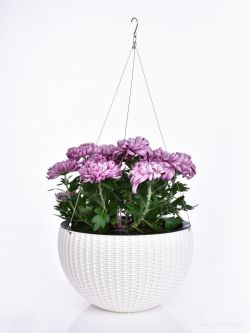 DEDRA Závěsný květináč, smetanový, XL