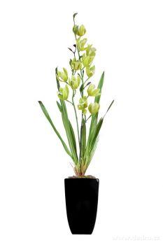 Dedra ORCHIDEA, v květináči zelená, ateliérová květina